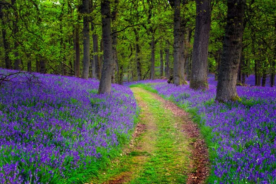 Волшебный лес в графстве Пертшир.