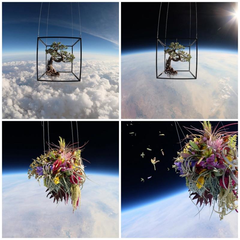 Бонсай в стратосфере Адзума Макото, художник из Токио запустил цветы в стратосферу. Два ботанических объекта: японский бонсай и букет из орхидей, гортензий, лилий и ирисов — были запущены в стратосферу в пустыне Невады. «Я хотел видеть движение и красоту растений и цветов, взвешенных в пространстве», — сказал Макото.