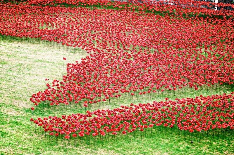 В честь столетия со дня участия Англии в Первой мировой войне художник-керамист Пол Кумминс и сценограф Том Пайпер совместно с волонтерами «посадили» вокруг замка Тауэр 888 246 красных керамических мака, каждый из которых символизирует погибшего во время военных действий.