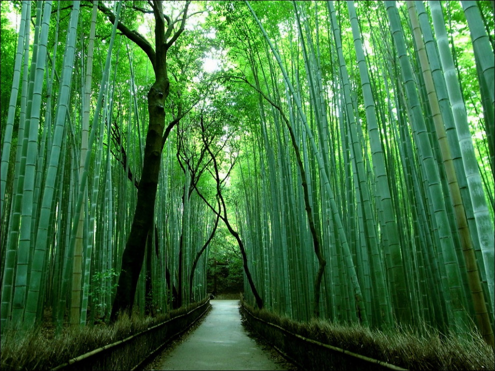 8247910-R3L8T8D-990-sagano-bamboo-forest-03