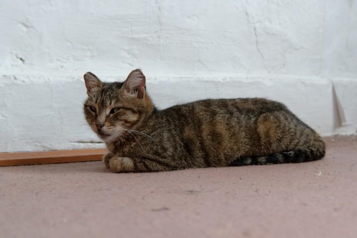 Кот бабы Лены