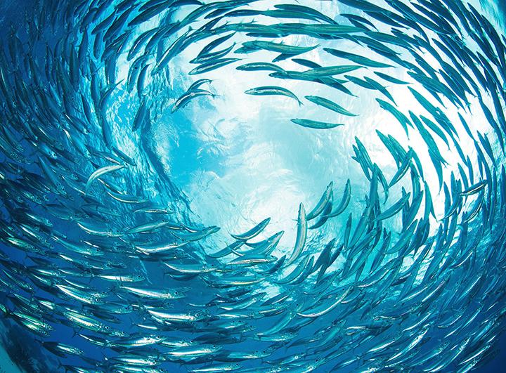150501-bestpod-fish