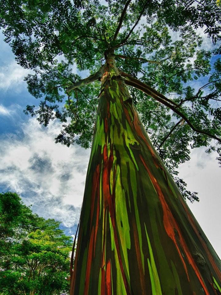 самые-необычные-деревья-на-свете-1