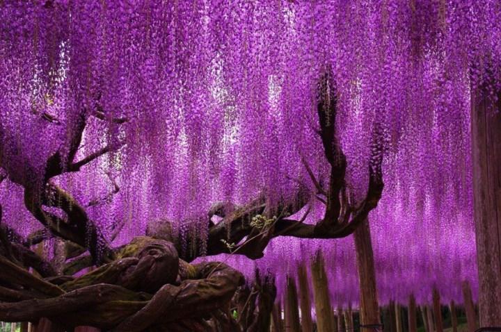самые-необычные-деревья-на-свете-2