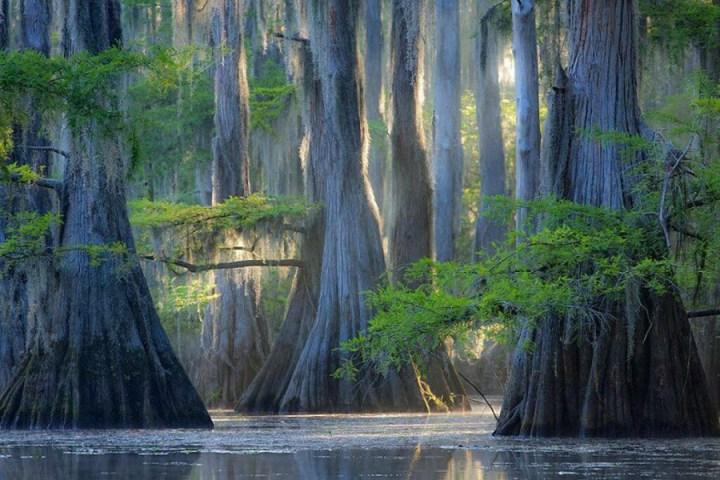 самые-необычные-деревья-на-свете-3