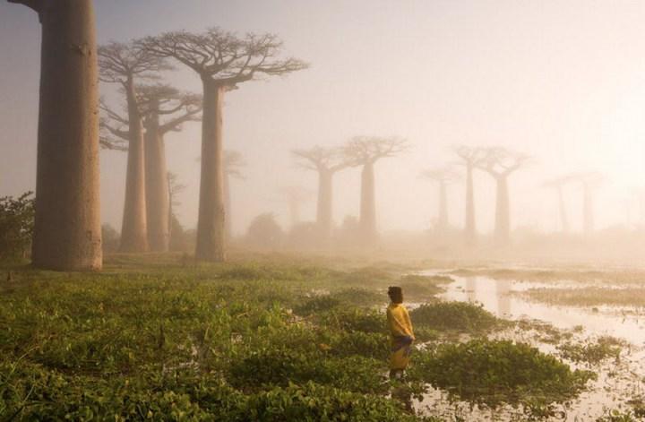 самые-необычные-деревья-на-свете-4