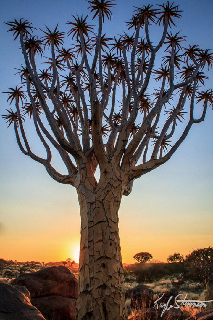 необычные фото деревья