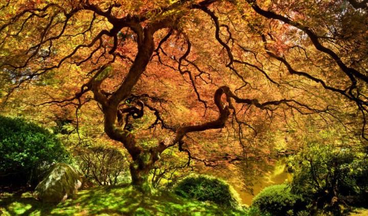 самые-необычные-деревья-на-свете-9