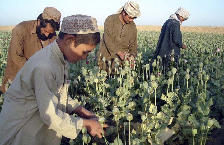 HOLD FOR FEATURE PAKISTAN TERRORIST WARCHESTS BY KATHY GANNON...**FILE** Afghan farmers work in opium poppy fields in Nawa district of Helmand province, south of Kabul, Afghanistan, in this file photo of April 25, 2009. the Taliban's money is coming mostly from extortion, crime and drugs, an AP investigation into financial networks has found. (AP Photo/Abdul Khaleq,FILE)