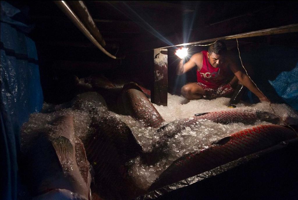 видео ловля рыбы на амазонке