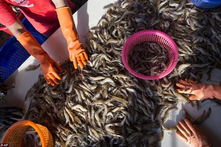 Работницы сортируют креветки на рынке морепродуктов в Махачае. Креветки – один из самых популярных морепродуктов в США.