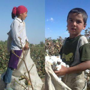 Пятиклассница и дошкольник на хлопковом поле