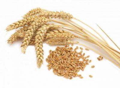 пшеница 0