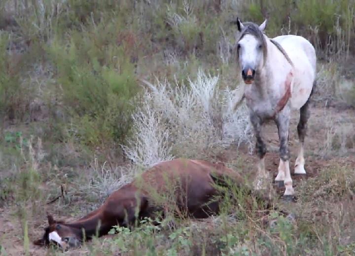 сбил лошадь