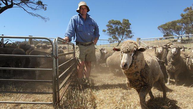 Австралия овцы