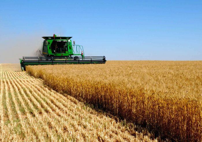Казахстан экспортировал неменее 8 млн. тонн зерна