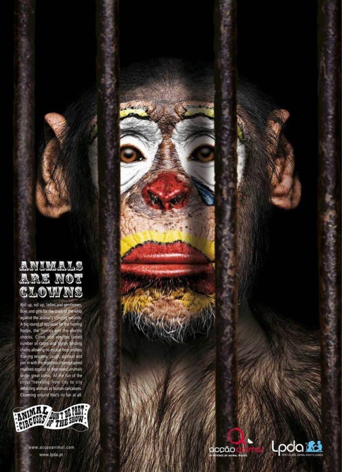 Животные не клоуны; шимпанзе в клетке