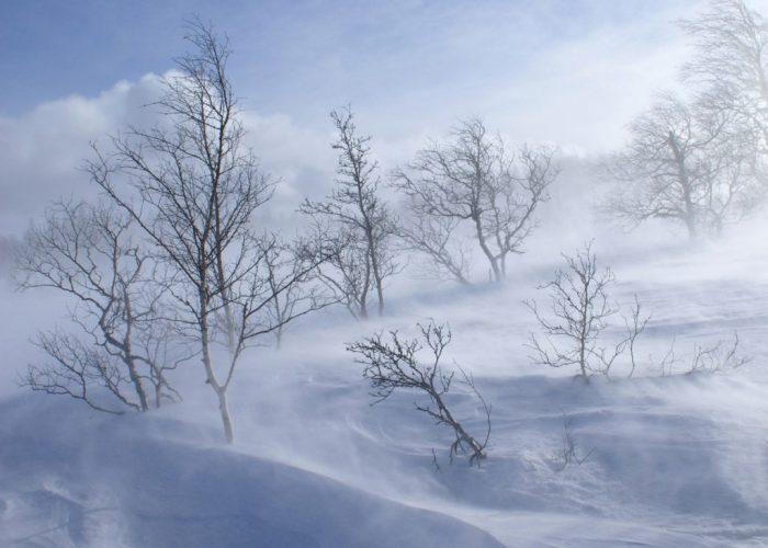 ветер зимой