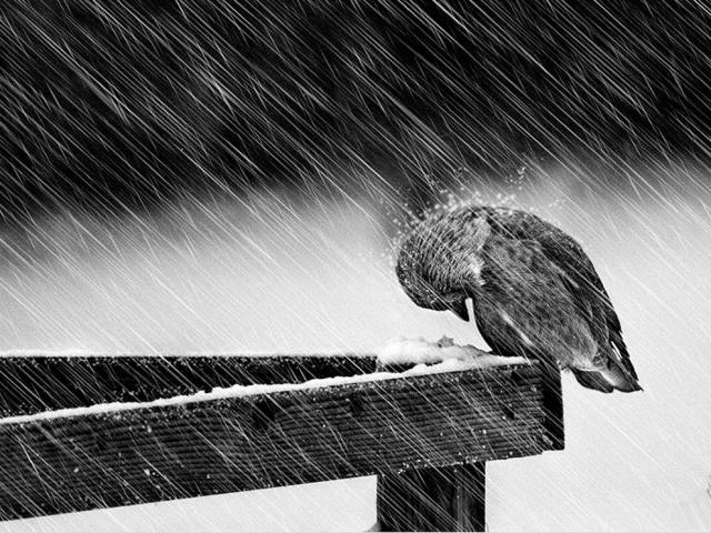 Дождь с переходом в снег