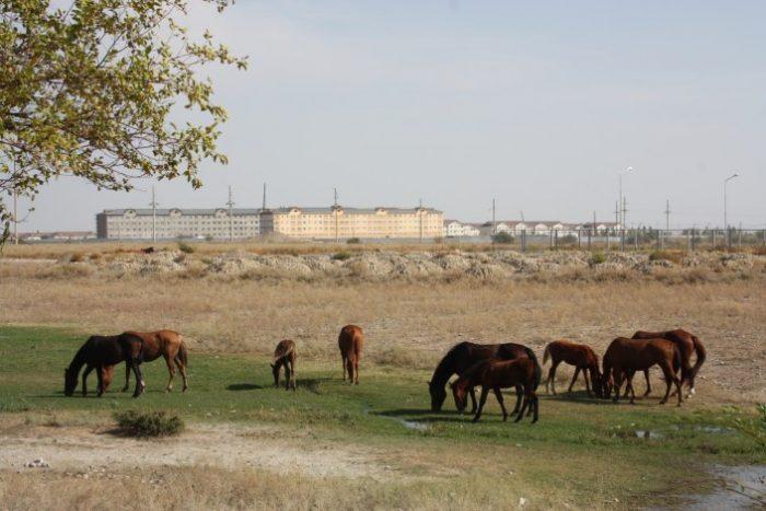 Пастбище близ строящегося города Нуркент в Алматинской области