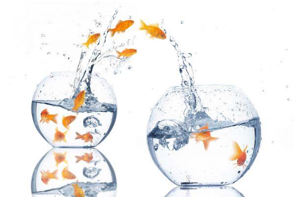 миграция, аквариум, рыбы