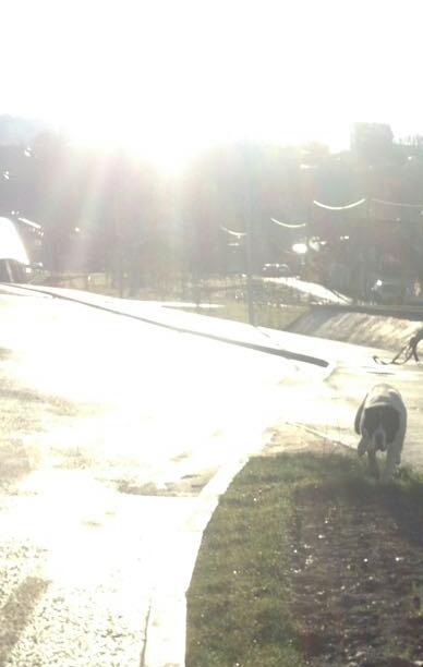 собака напала на бегуна в ЦПКиО