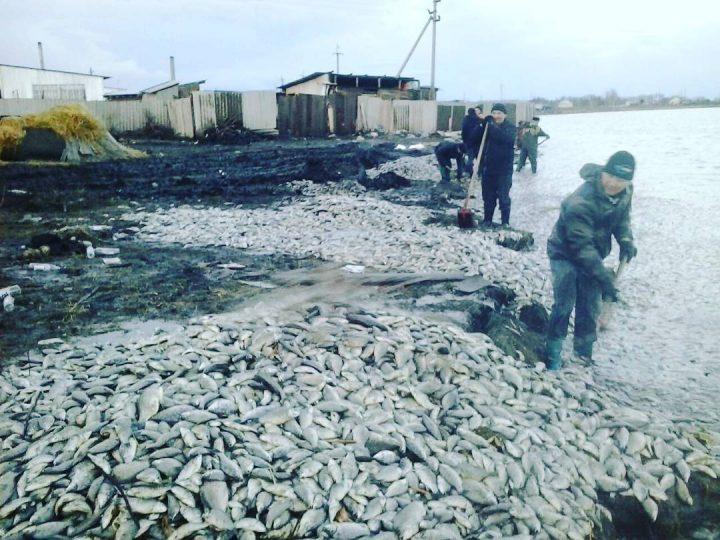 Около 5-ти тонн мертвой рыбы выбросило наберег озера вСКО