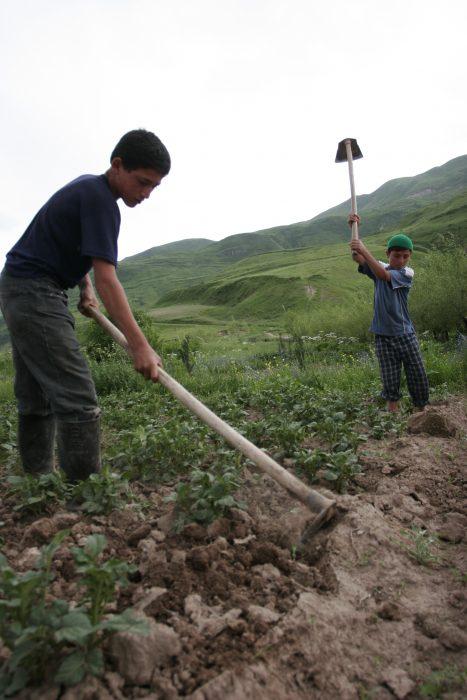 мальчики работают в поле. Таджикистан