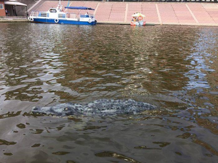 крокодил в Астане