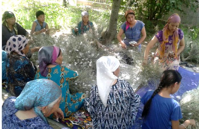 Производство коконов тутового шелкопряда в Узбекистане