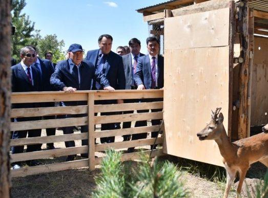 президент смотрит на животных в лесопосадках вокруг астаны