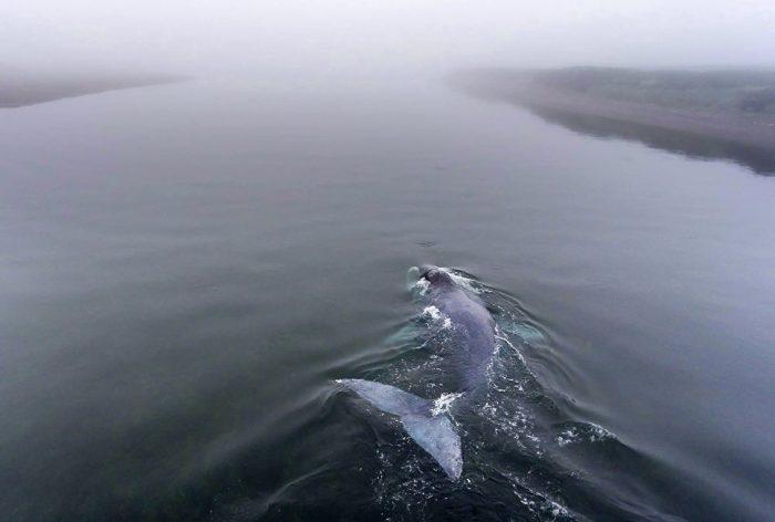 кит сел на мель в России