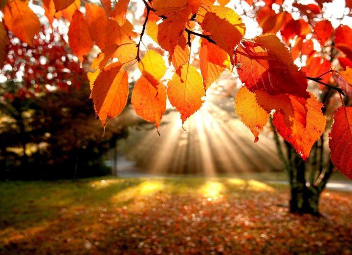 Осень солнце
