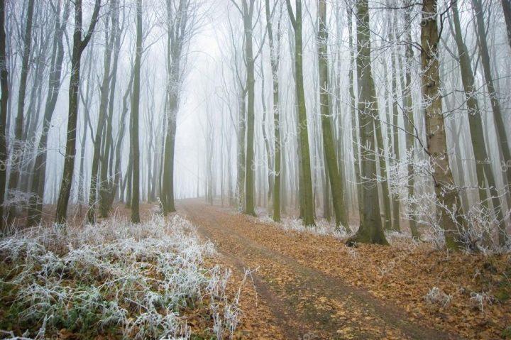 Туман осень