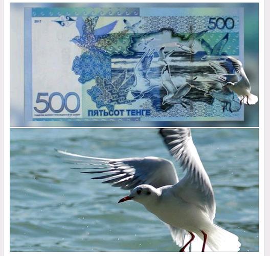 чайка на банкноте