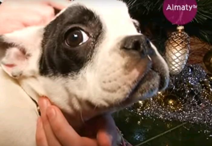 щенок, подаренный назарбаевым