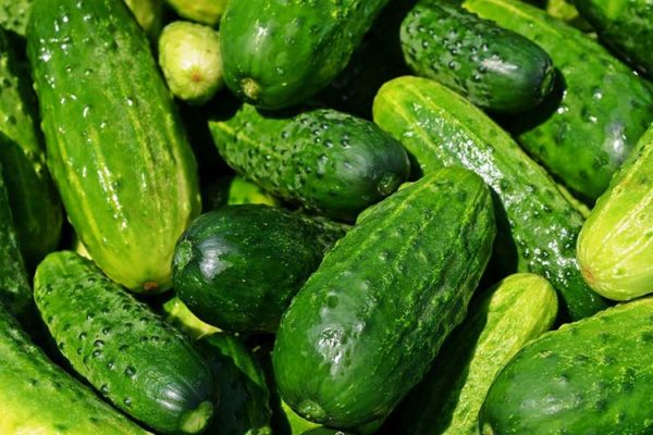 ogurtsy 600x400 - Named an unexpected benefit of cucumbers