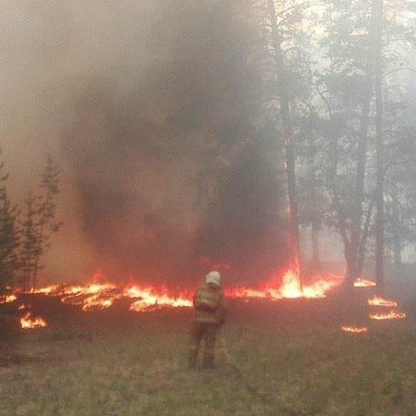 пожар красный кордон семей