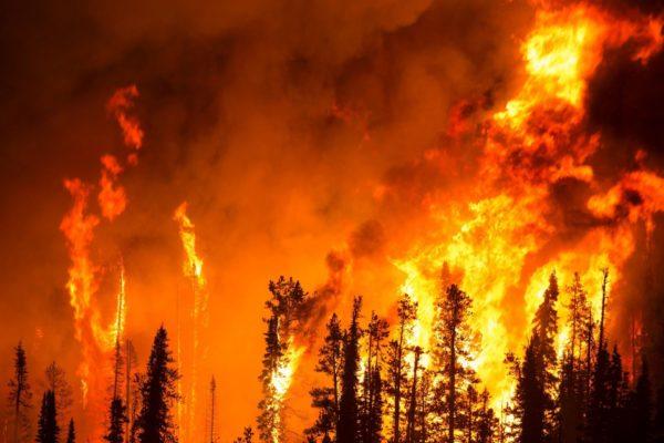 lesnoj pozhar 600x400 - The children had a forest fire in Ile-Alatau national Park