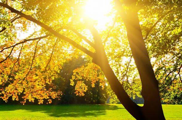 тепло осень