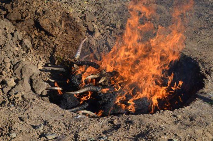 сожжение сайгачьих рогов