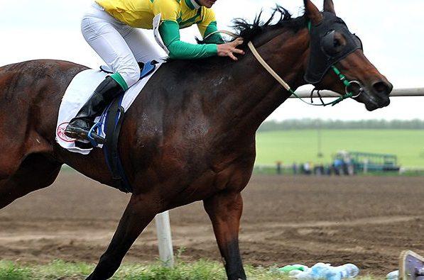 скачки конный спорт