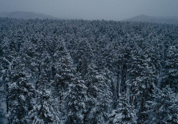 Тайга, лес, Сибирь