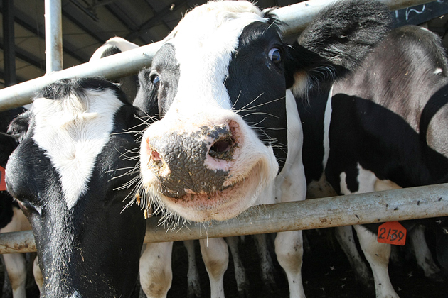 5e7e57873ac8bfa2728ae4ae97f9af58 - In Kazakhstan, more expensive beef, it exports?