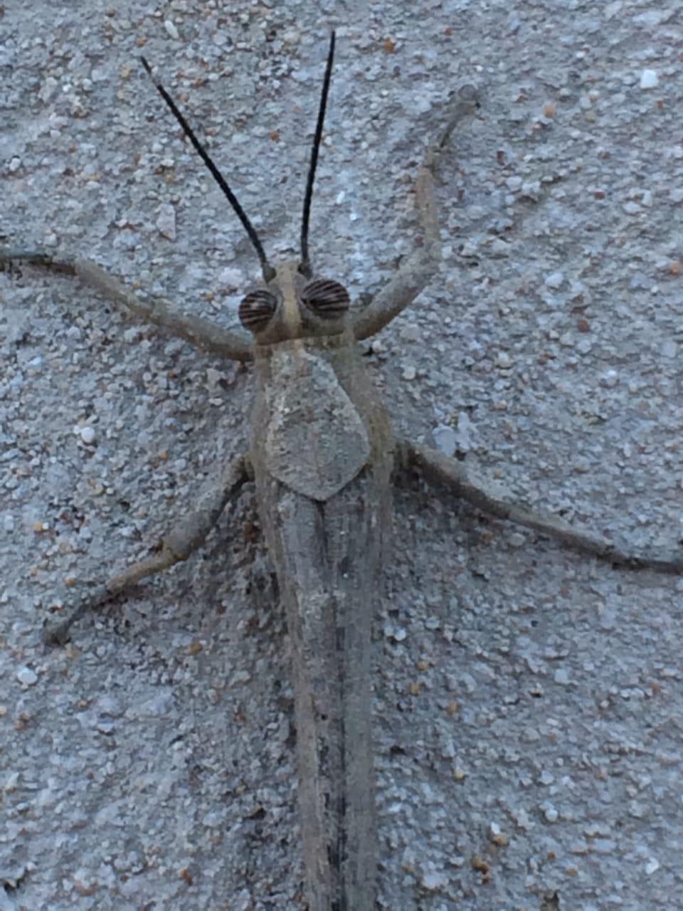 Неизвестное насекомое