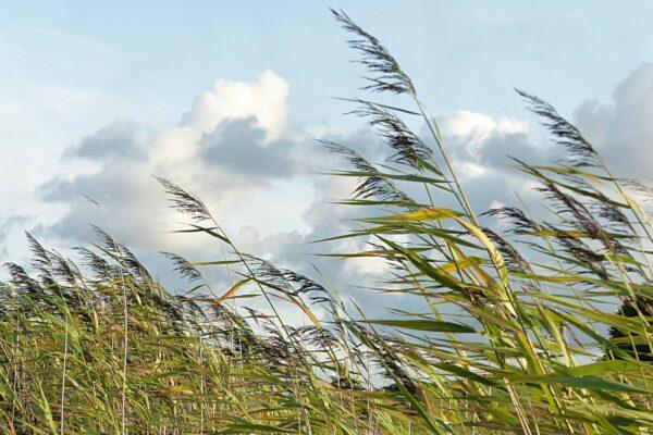 df9991a179ca1b92983b3e1ac0774b4f 600x400 - Weather Aug 1: wind, possible hail