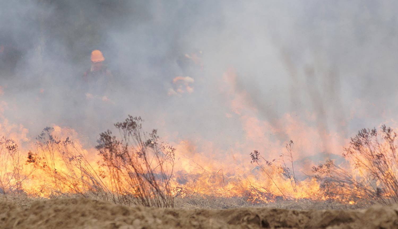 Сухая трава горит, пожар