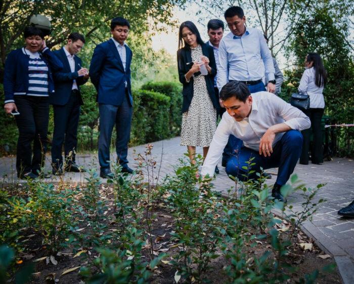 деревья и цветы нур-султана
