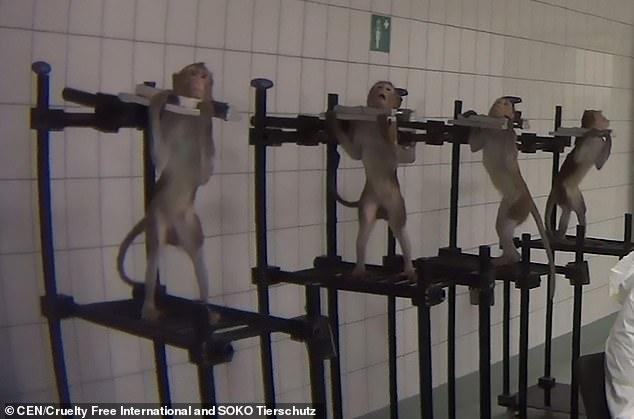 44b82d03a5eaca6ca2a3983b95ff6e77 - Terrifying farm lab found in Germany (18+)