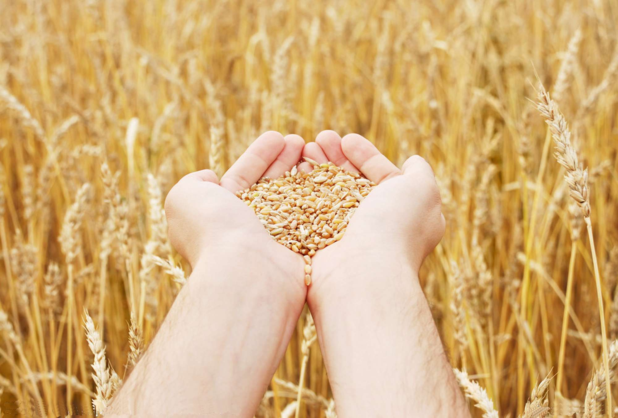 fafd8541eba9b9273f54aabf902e4ad4 - Kazakhstan changes the strategy of the grain export